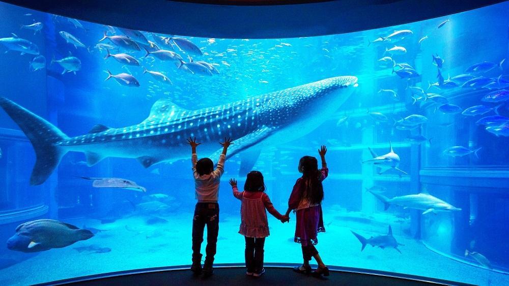 C:\Users\SE7EN\Downloads\artikel\jepang-osaka-aquarium-kaiyukan_b3e6b43946a90e0151a6138063c7e57a10f38d06.jpg