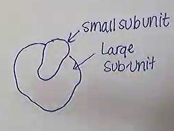 Subunit.png