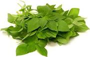 Image result for Lemon Basil