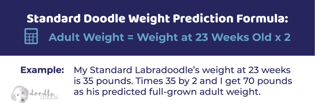 flandoodle size