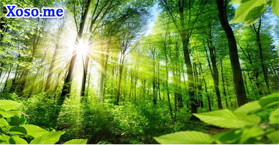 Ý nghĩa giấc mơ rừng cây