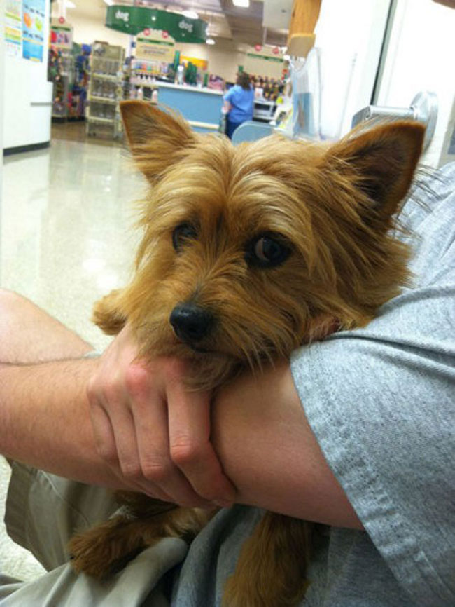 funny-scared-animals-vet-hugs