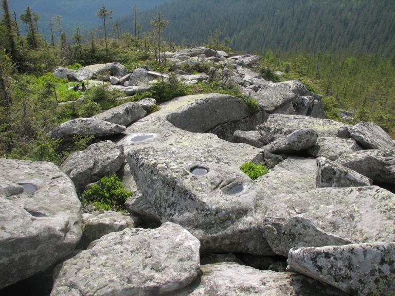 фото: jacq-paganel.com.ua