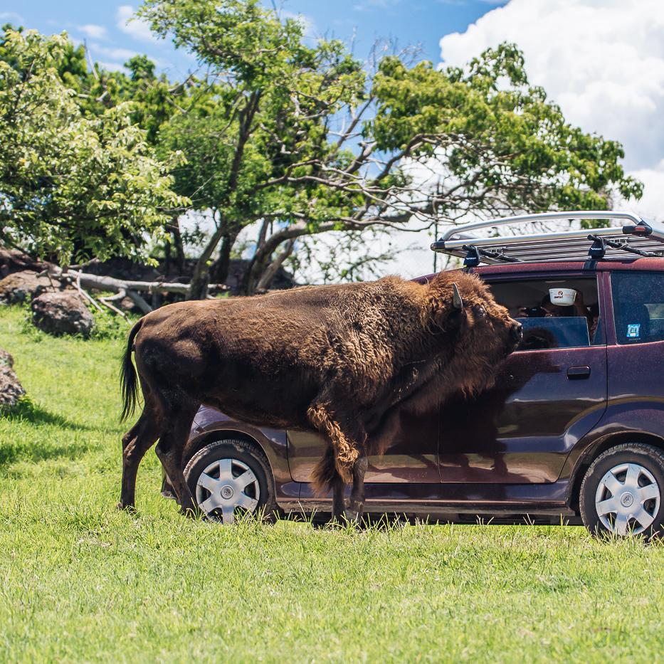 Zoofari actividades-135.jpg
