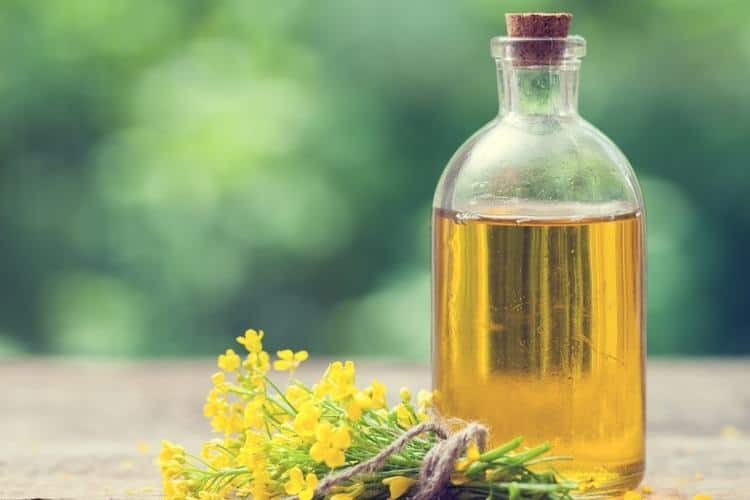 excess weight gain canola oil
