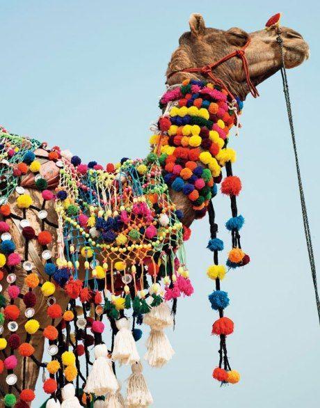 Camelo com macrame colorido.