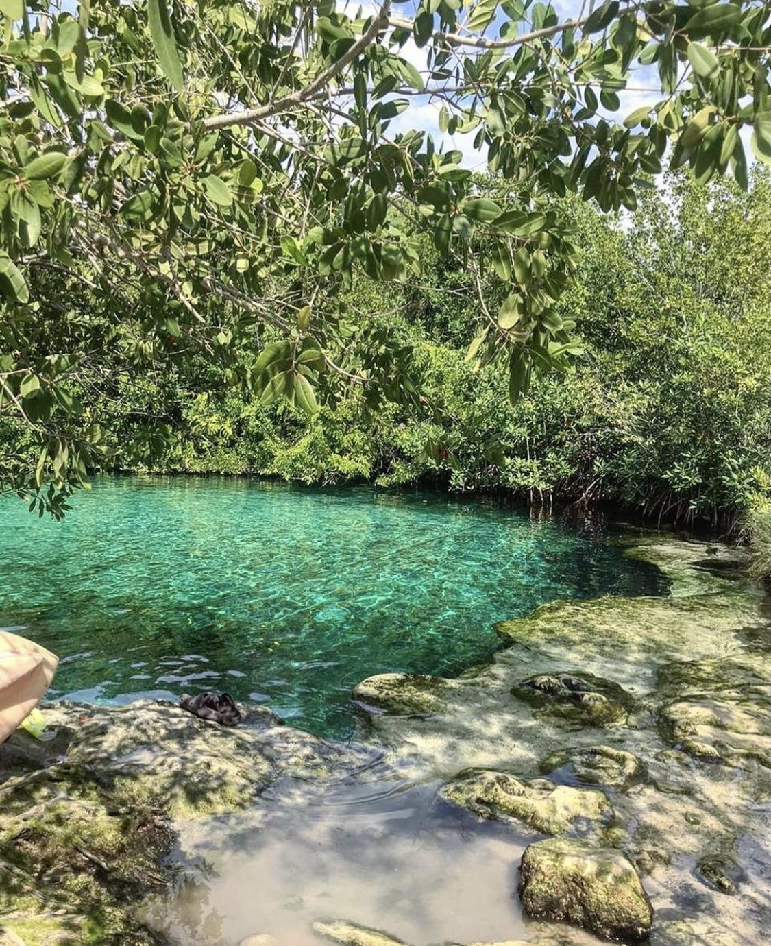 cocodrilos en los cenotes