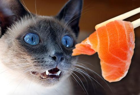 Hasil gambar untuk cat eating
