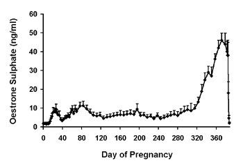 Mean (+sem) serum oestrone-sulphate concentrations in pregnant camels.