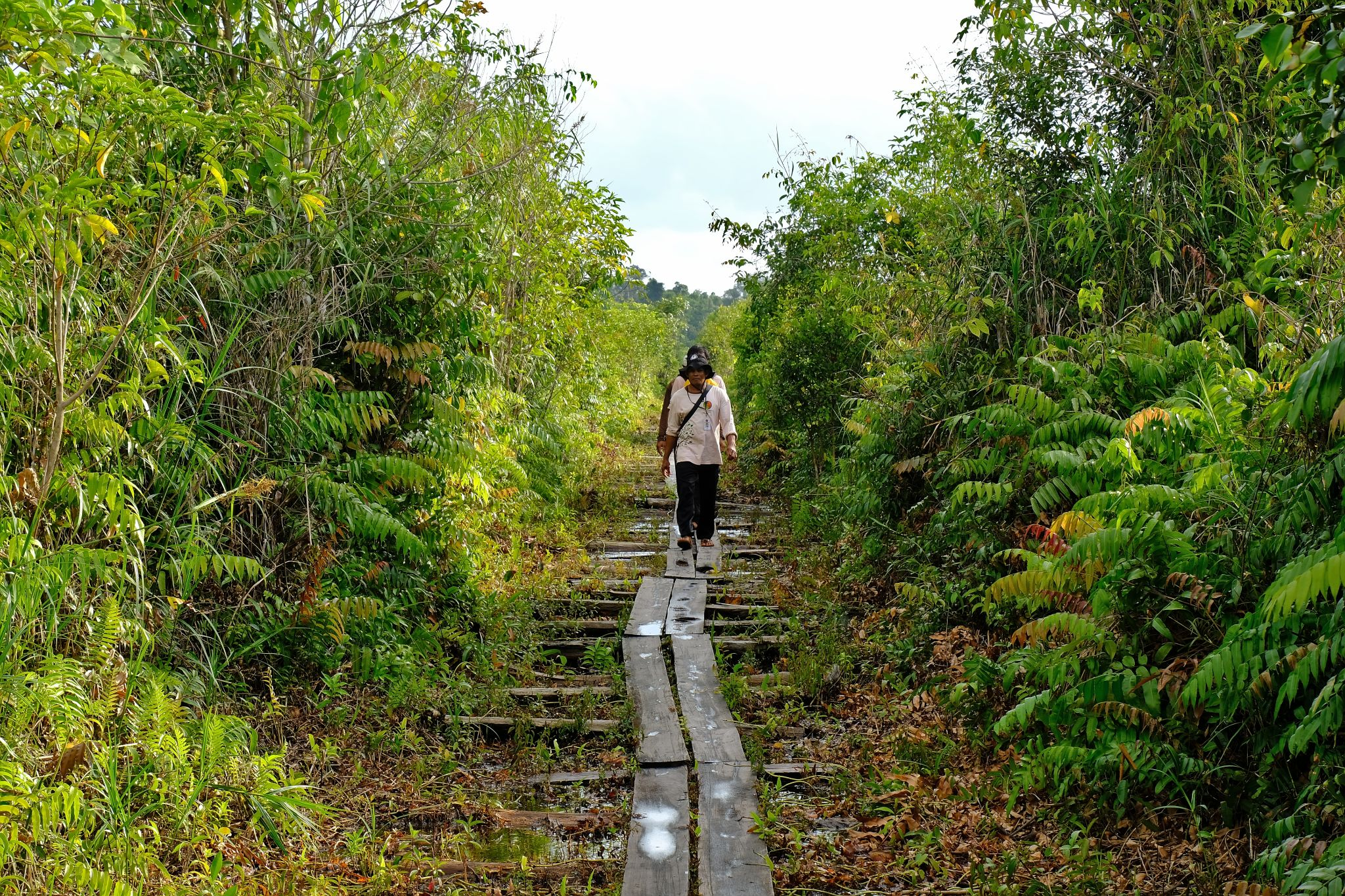 Two figures walk toward the camera down a wood-plank-lined path through a green, forest area.