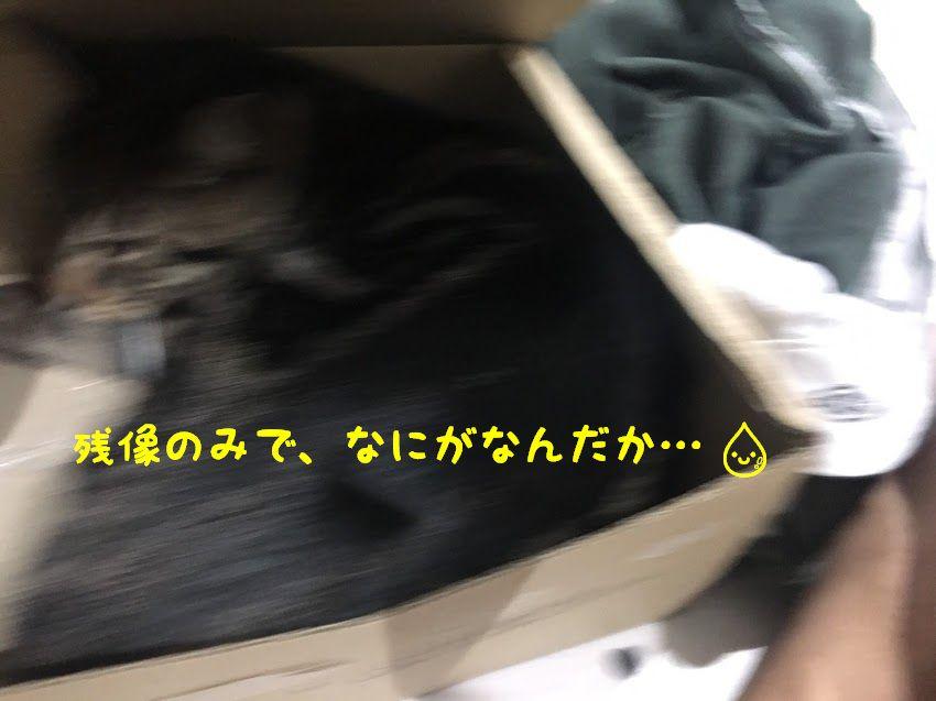 猫の写真を上手に撮りたいを叶えるおススメアプリ!