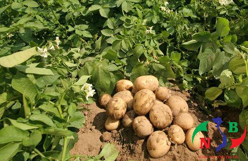 Các chính sách hỗ trợ của Nhà nước đối với các cây trồng nông nghiệp
