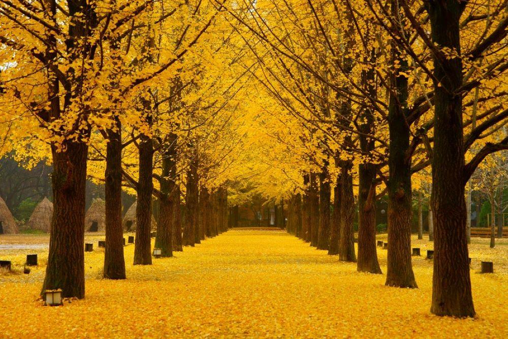mùa thu hàn quốc vào tháng mấy hàn quốc mùa nào đẹp du lịch hàn quốc mùa nào đẹp nhất rừng cây  mùa thu ở hàn quốc