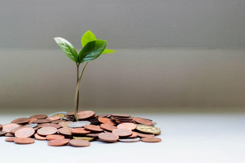 A seedling growing from a pile of coins  Description automatically generated with medium confidence