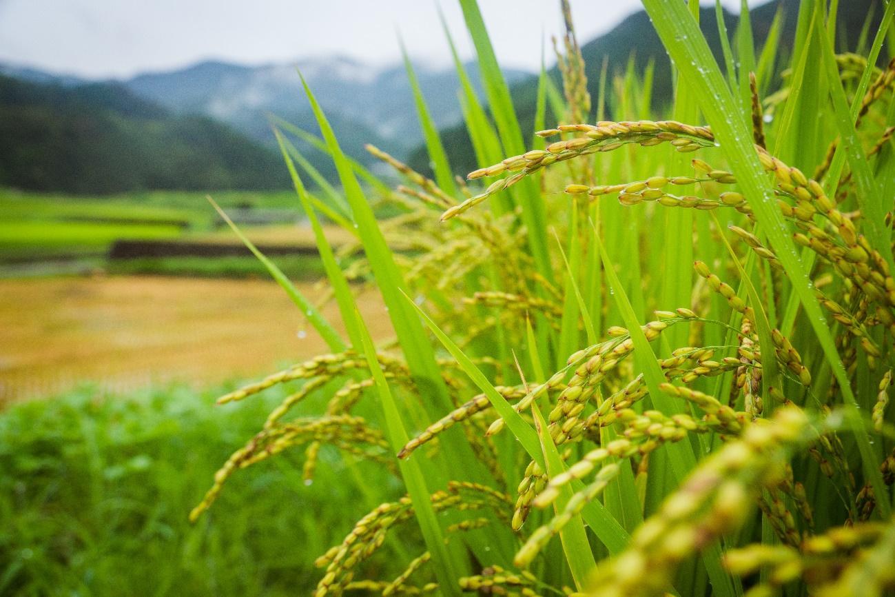 草, 屋外, 植物, 木 が含まれている画像  自動的に生成された説明