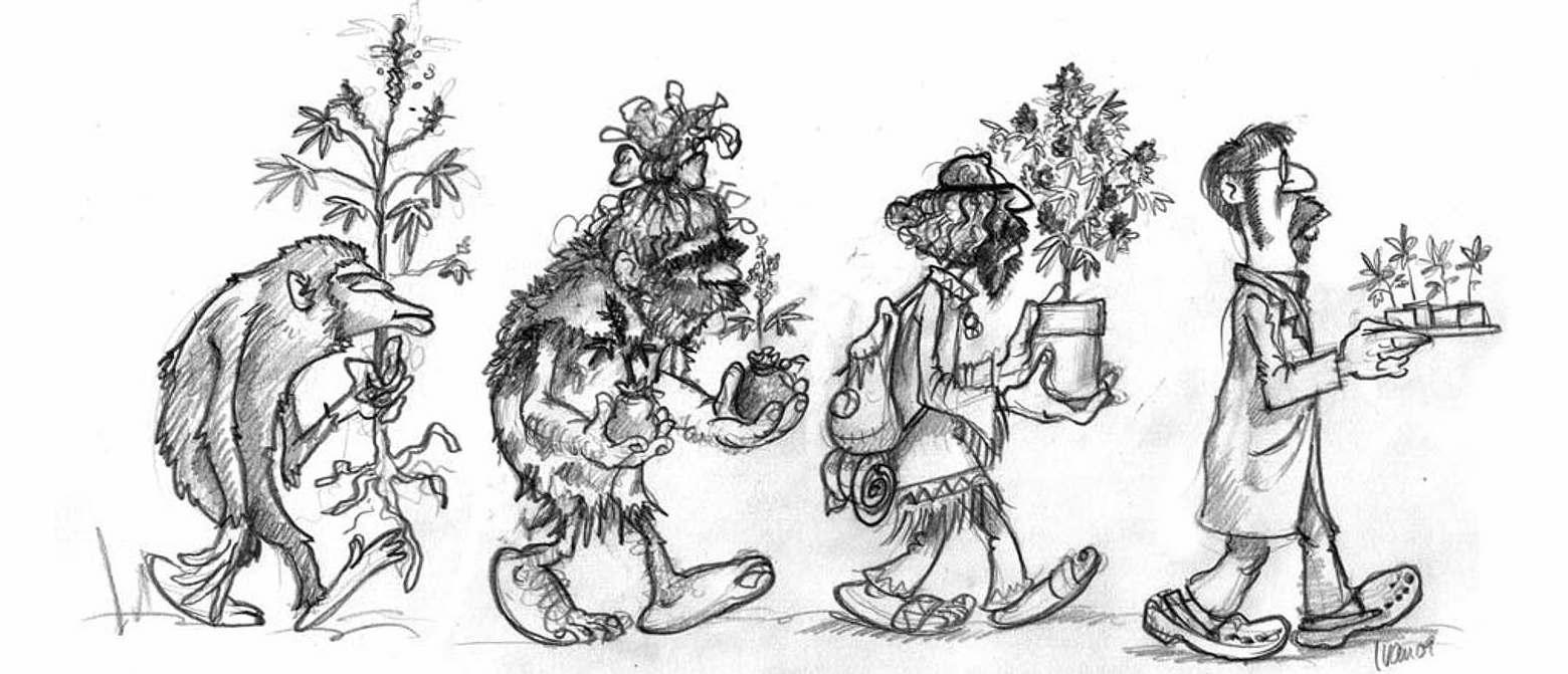 Origins of the Indica Cannabis Plant