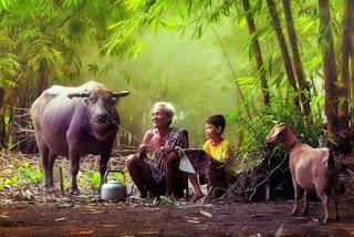 ảnh đẹp nông thôn Việt Nam