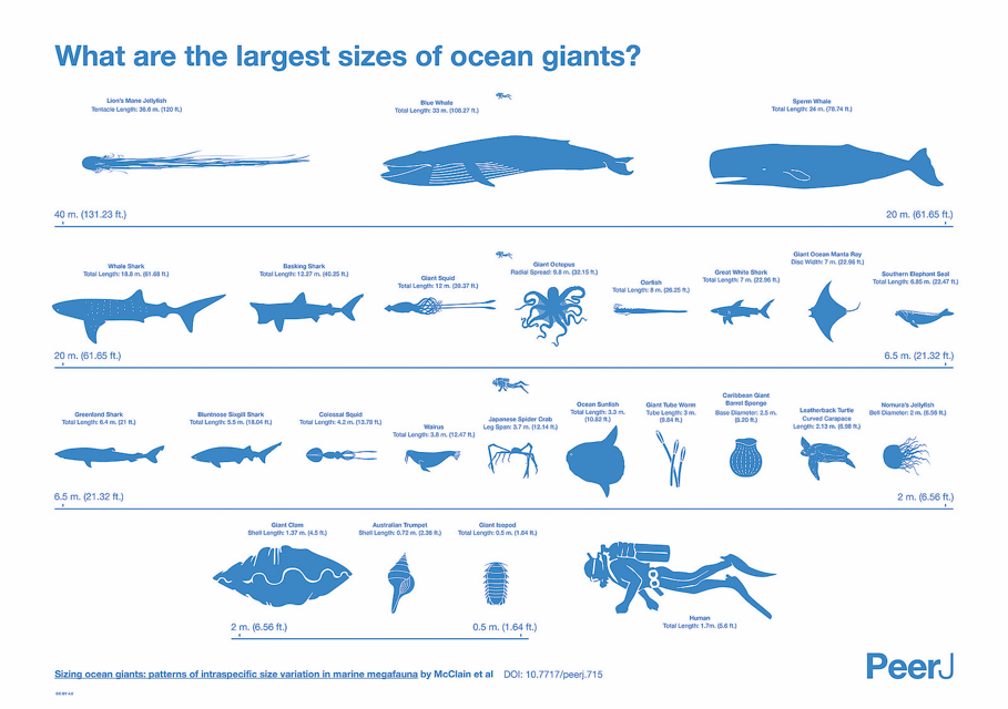 explanatory image showing information on ocean giants