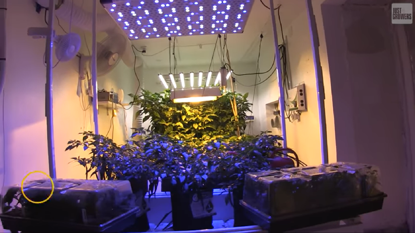 Grow lights and fans