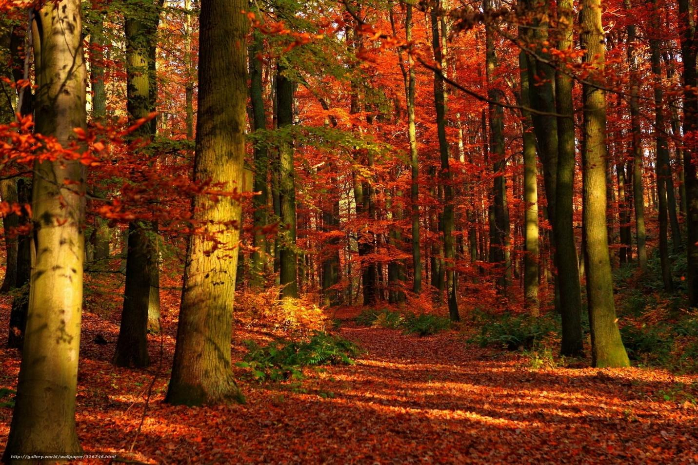 forest, autumn, Trees, nature