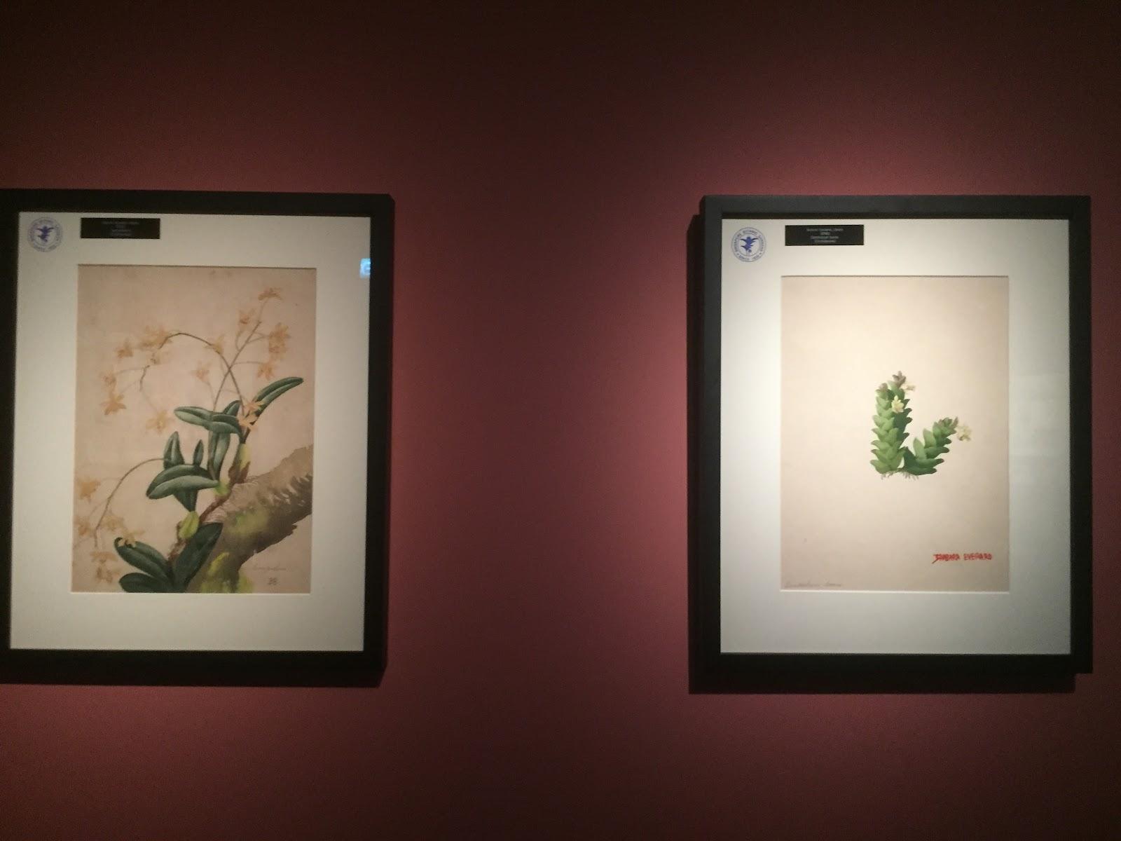 More botanical paintings on display