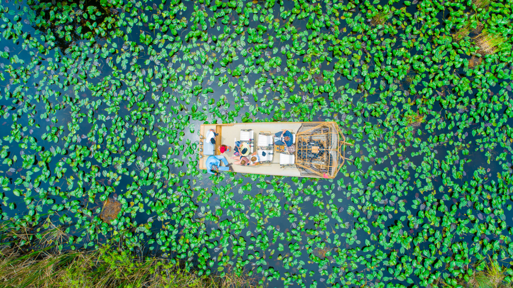 Aerial view of a boat with people in the swamp of the Everglades
