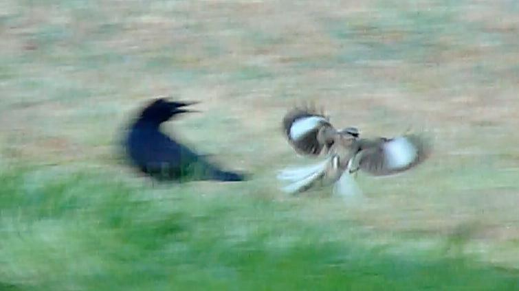 Bird Play 4.jpg