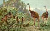Image result for Moa
