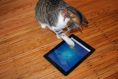 app for cat