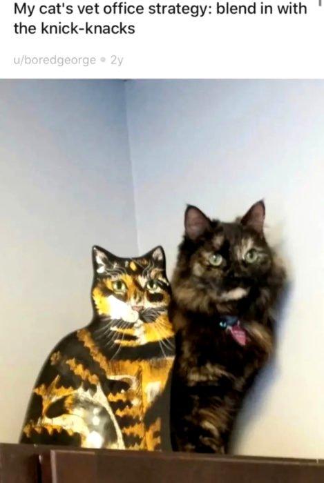 Gata carey tratando de esconderse del veterinario detrás de una escultura de gato