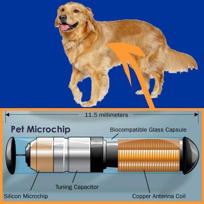 http://blogs.rgj.com/mostlydogs/files/2012/11/26.-Microchip_03.jpg