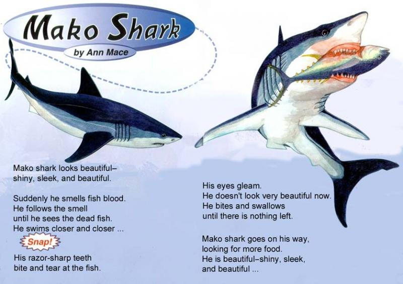 article about a mako shark