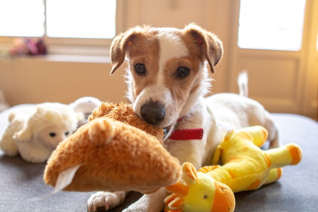 Dog playing with a stuffed toy