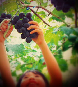 wine tourism children grapes