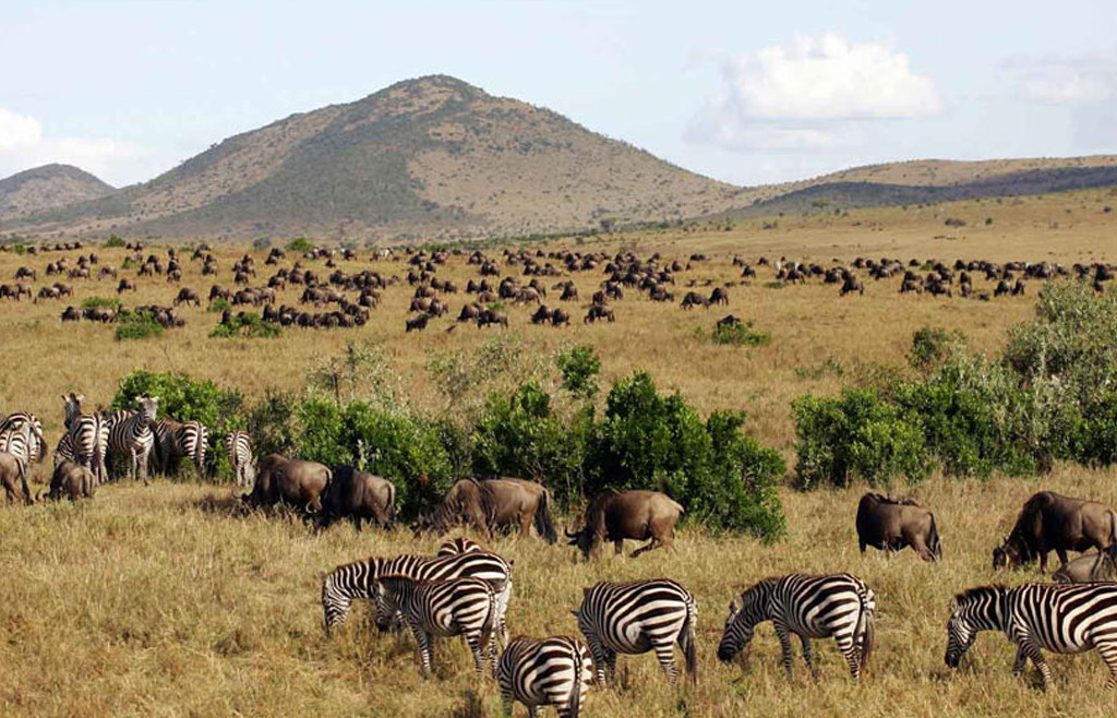 Wildlife tours in Tanzania. Visit National Parks of Tanzanian Northern Profile