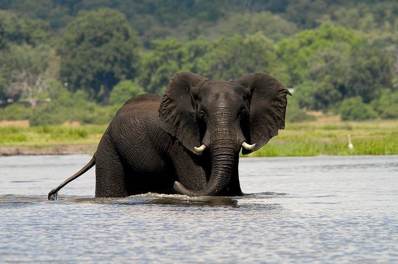 chobe-day-trip-elephant-wade.jpg