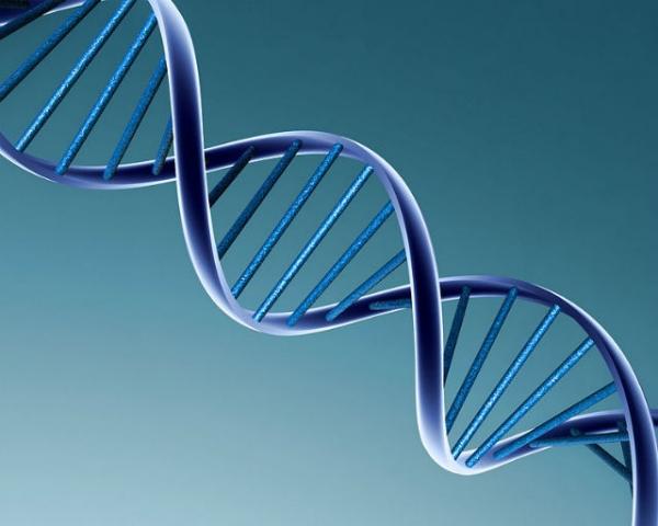 cient-ficos-de-california-descubre-el-rejo-biol-gico-que-mide-edad-del-tejido-humano.jpg