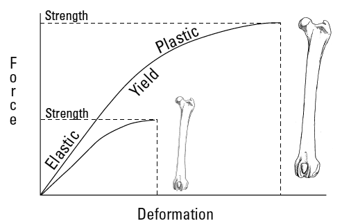 Idealized load-deformation curves for femora from a Rottweiler and a Chihuahua tested under torsion
