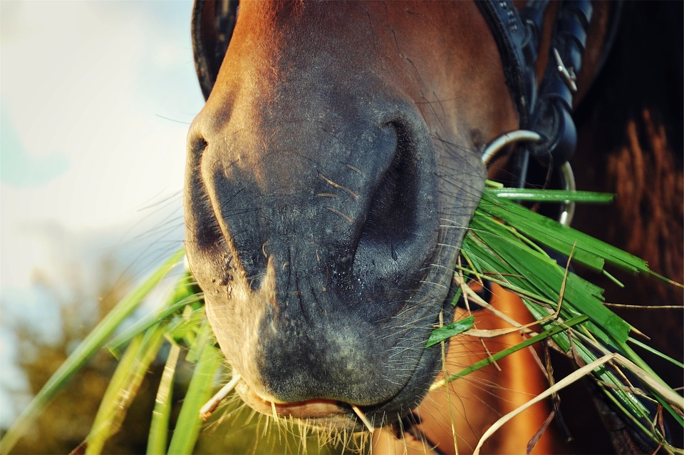 Free photo: Horse, Eating, Grass, Animal - Free Image on Pixabay ...