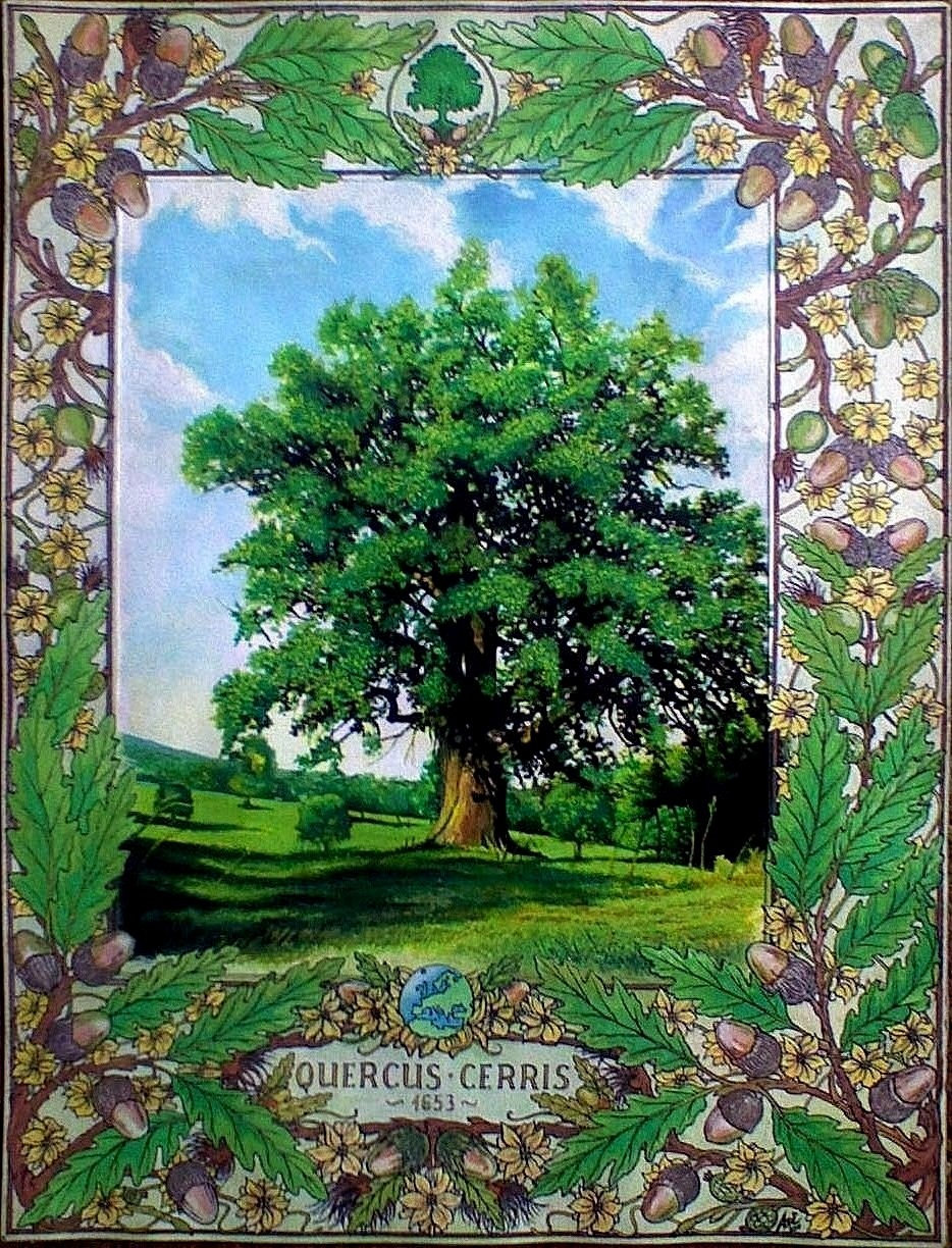 QUERCUS CERRIS 1653 (THE OLD OAK) - Frieze and illustration; Book cover, MMX-MMXI - Ink and gouache on carton - 16,54 X 11,81 in.jpg