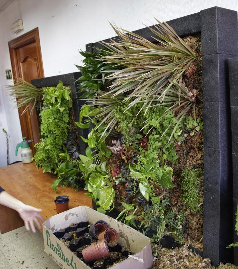 Curso de jardines verticales en madrid todo un xito for Aprender jardineria