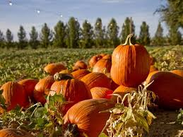 Image result for Halloween Streetcar Pumpkin Patch