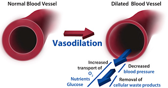 blood vessel dialation