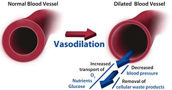 blood vessel dialation