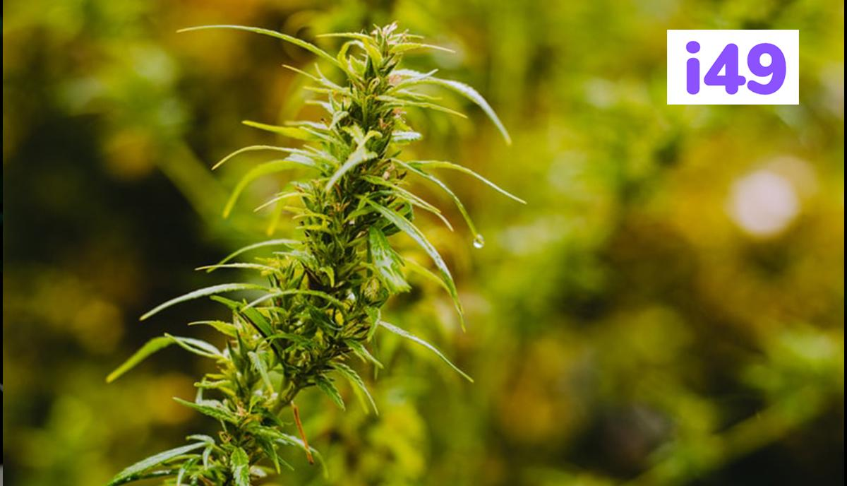4.-Good-Soil-Preparation-For-Growing-Cannabis-Outdoors-big