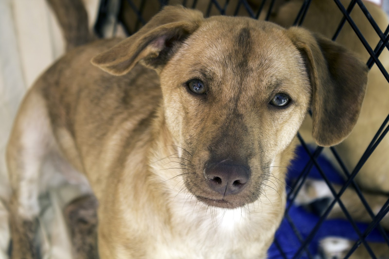 Mixed dog in a shelter ready for adoption.