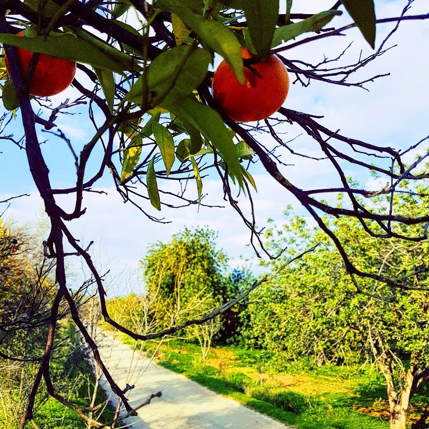 Via de Laranja, Appelsiininkukka, UNKNOWN PORTUGAL