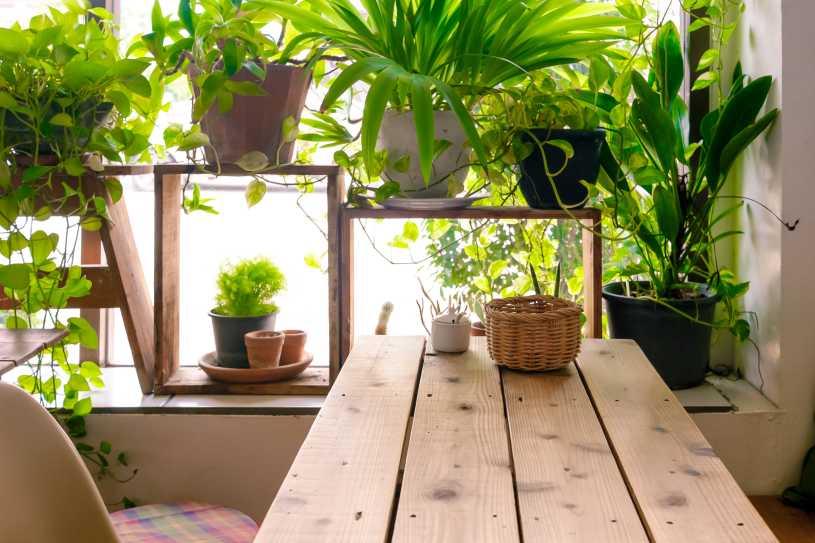 tendencias-decoracion-ecologica-decoracion-interiores-plantas