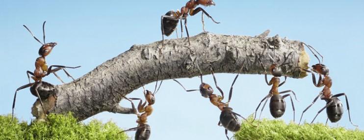 liderazco comunicacion y trabajo en equipo.jpg