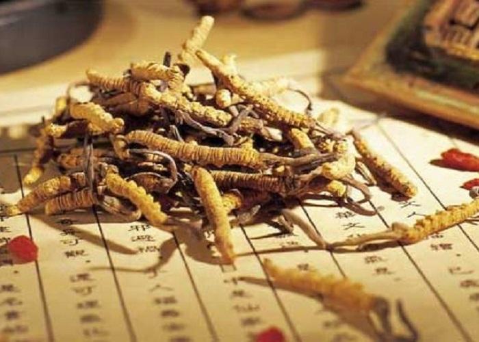 Đông trùng hạ thảo khô là dược liệu quý hiếm
